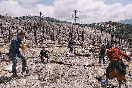 Colorado deforestation