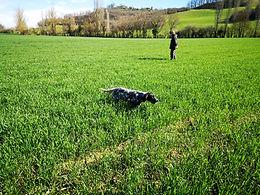 La Commingeoise produits fermiers BIO élevage canin setter anglais