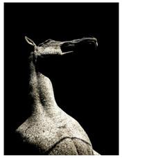 Equine humanité