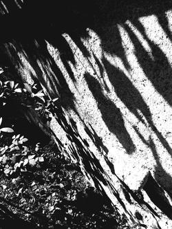 Ombres champêtres / 3