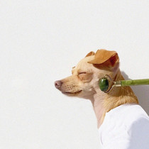Dog with face roller
