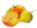 Orange_and_lemon_1024x1024.png