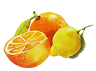 Orange_and_lemon_1024x1024.png