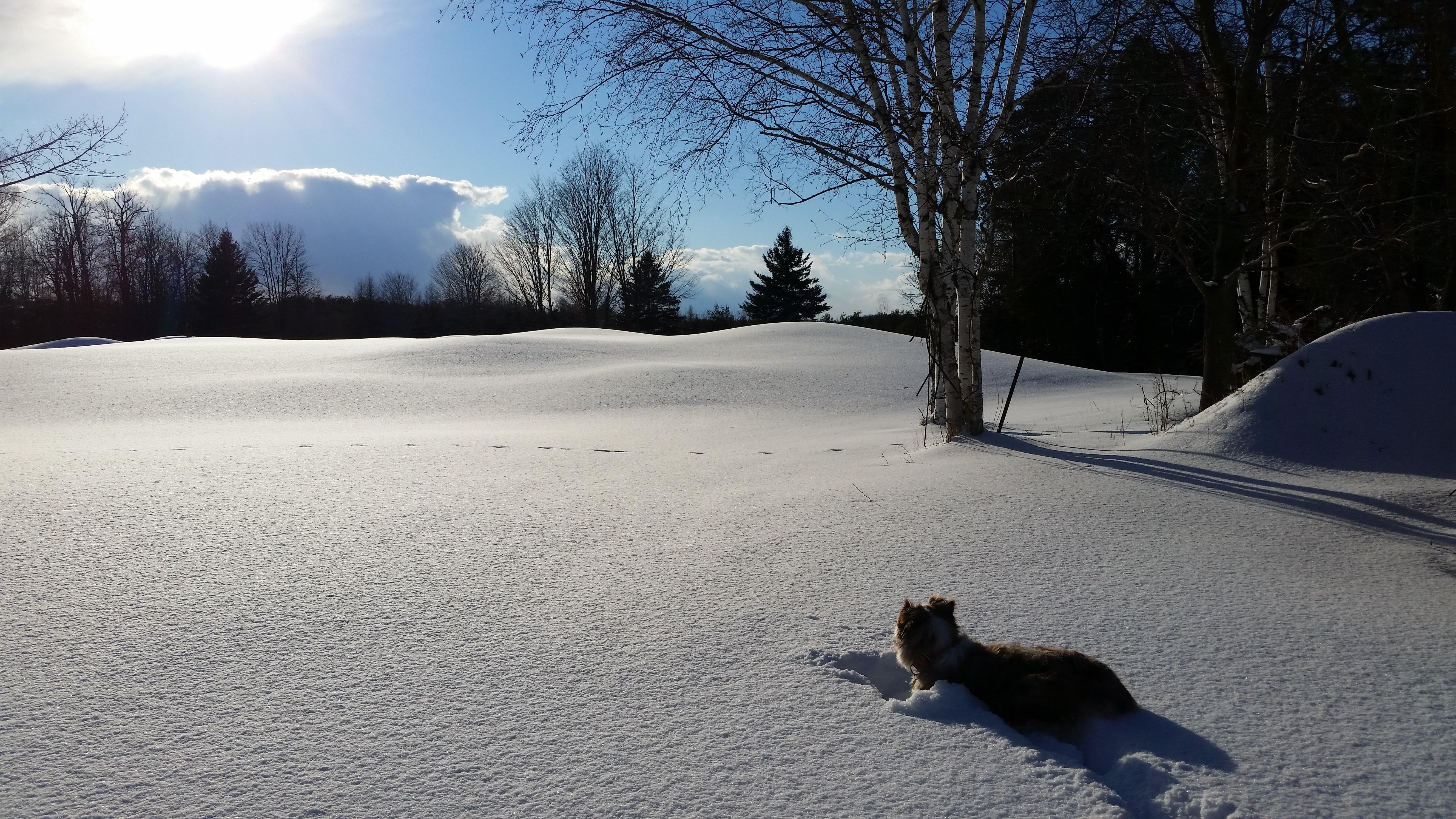 Par enjoying the snow and sun of Februar