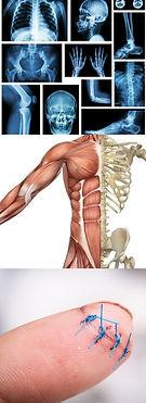 SKELETAL SYSTEM, MOVEMENT, SURGERY, BONES, SKIN, SPLINTS, SPINE POSTURE, MUSCLES, FINGERPRINTS...