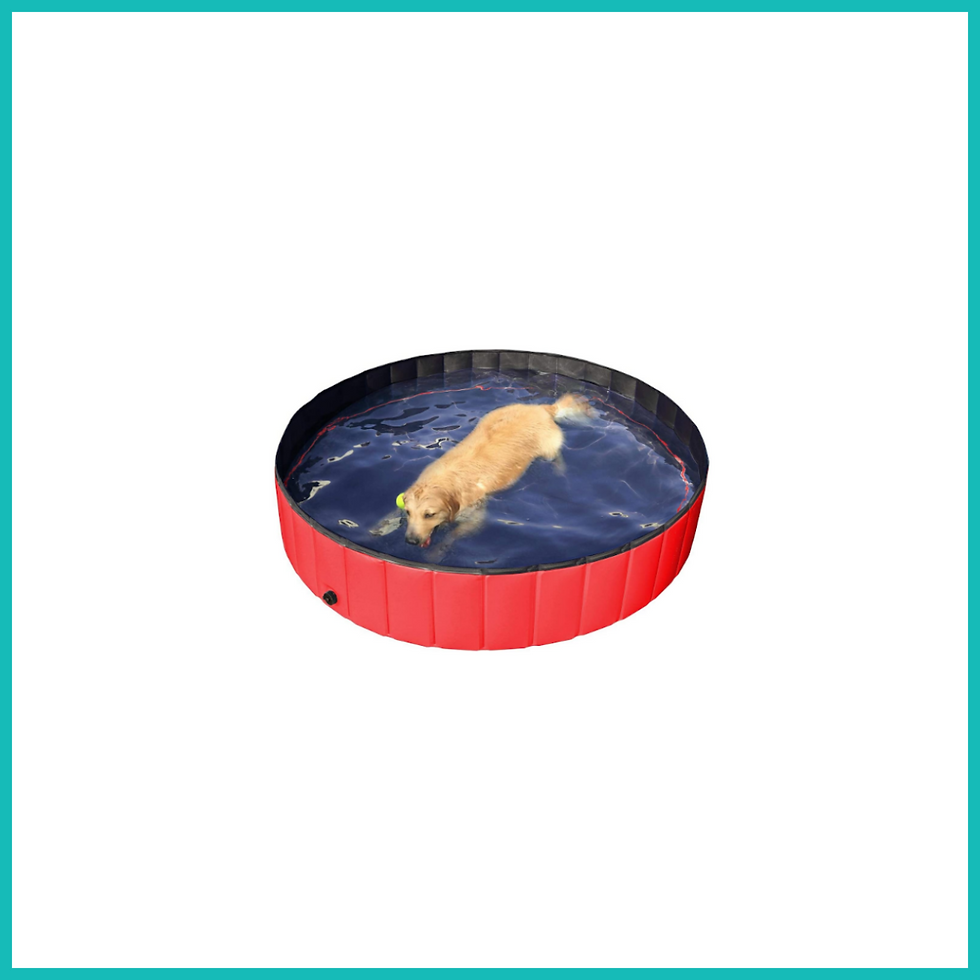 Large doggy pool