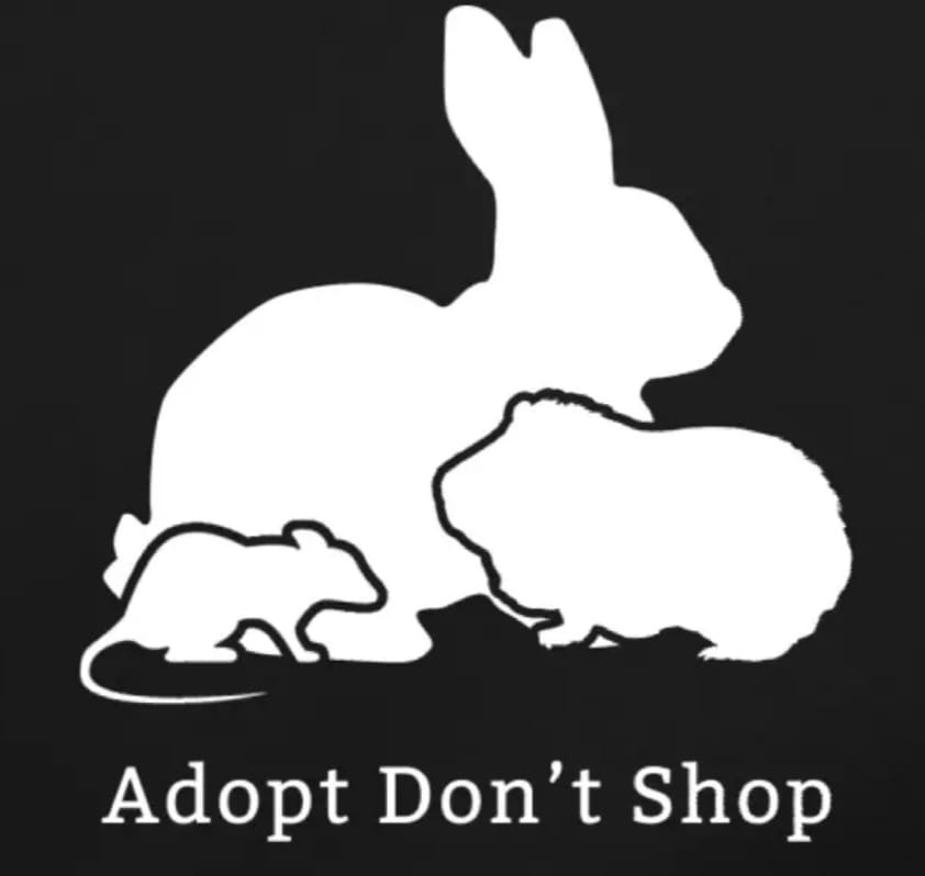 We are reopening for adoptions