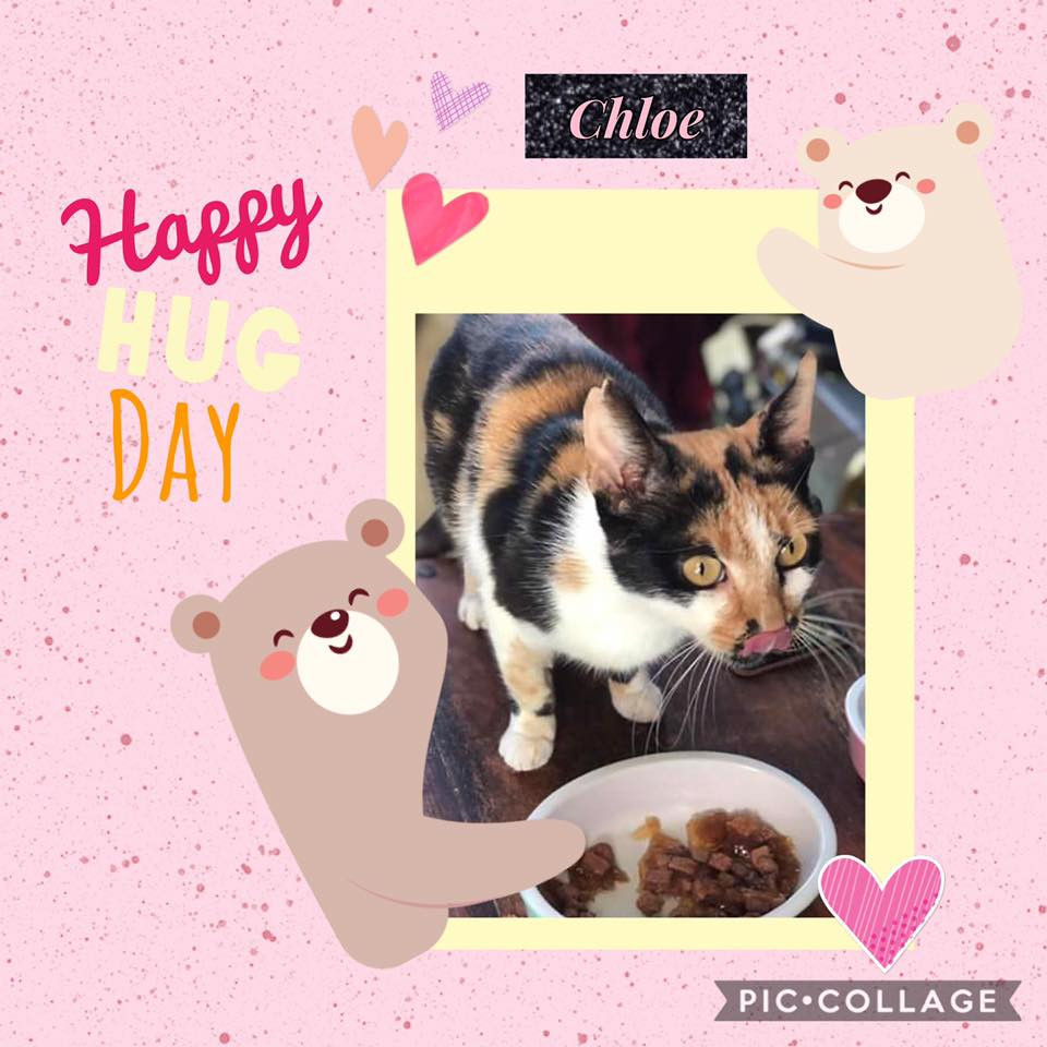 Beautiful Chloe is our little fiv girl from Romania
