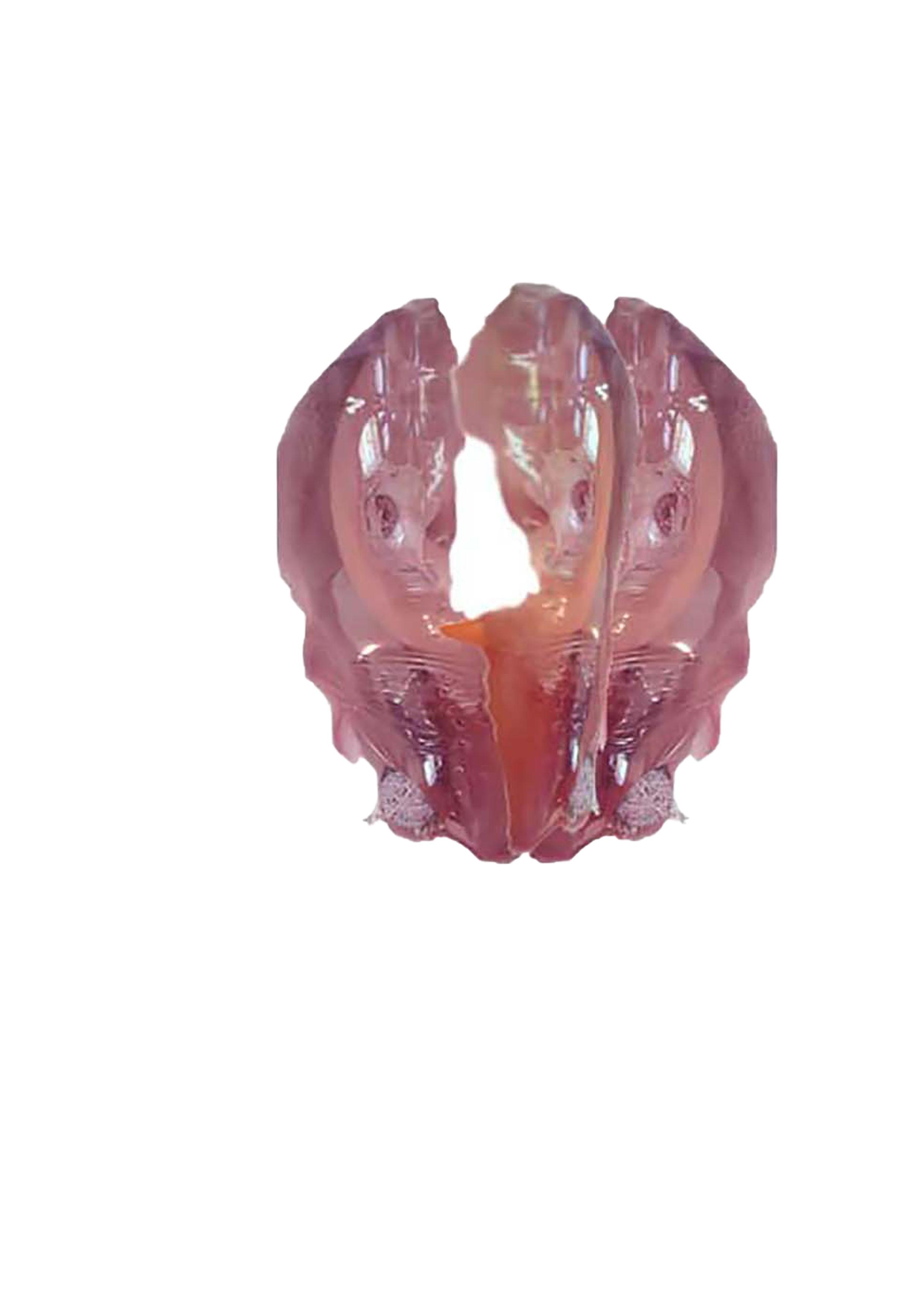 x hominumplasticus V