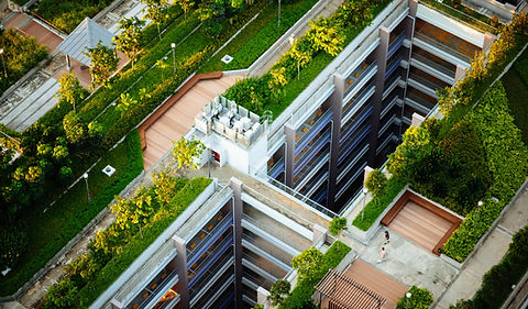 Green roofs in a city