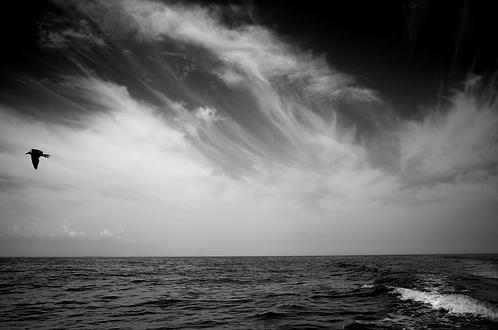 Terre en vue !collection (Landscape)Tirage 90 X 60 cm, 135 x 90 plein format, Patrick Raymond