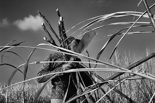 caña (1)  Tirage 90 X 60 cm, 135 x 90 plein format, Patrick Raymond