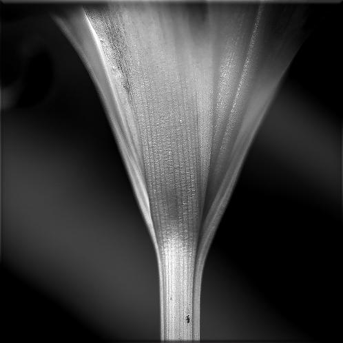 Tirage noir et blanc sur plexi 90 x 90 cm