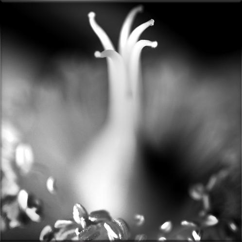 Le Spectre Blanc, Tirage 90 X 90 cm, plein format, Patrick Raymond
