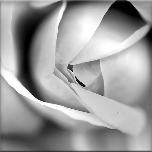Madame Tirage 90 X 90 cm, plein format, Patrick Raymond
