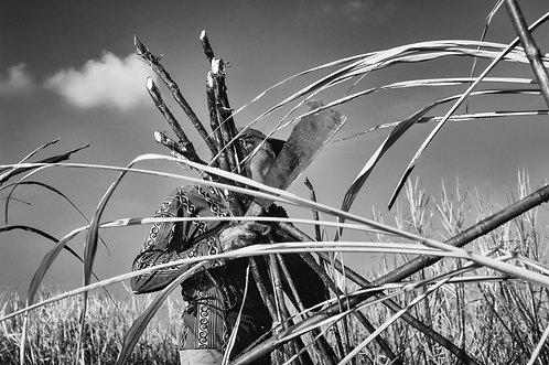 Caña (collection Sacré, Salé, Sucré) Tirage 90 X 60 cm, 135 x 90 plein format, Patrick Raymond