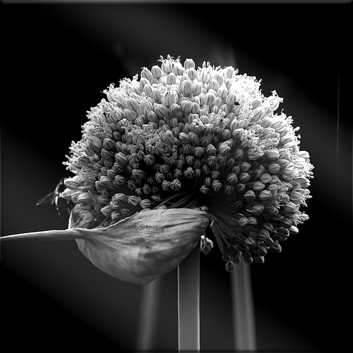 Tirage noir et blanc sur plexi 90x90