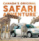 lion safari.jpg