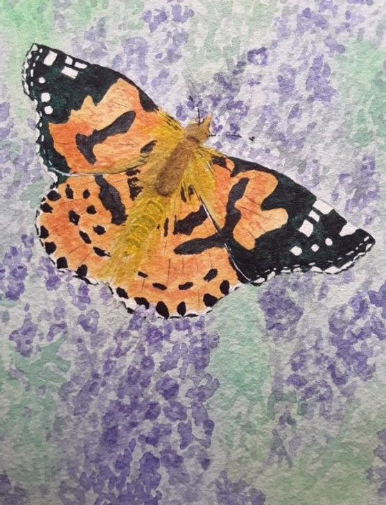 Barbara Painted Lady on Lavender.jpg