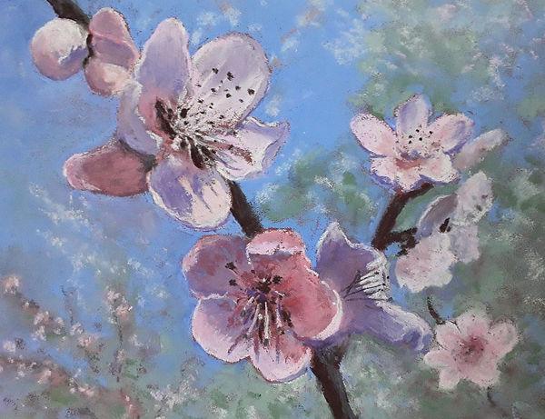 Chris Cherry blossom.jpg