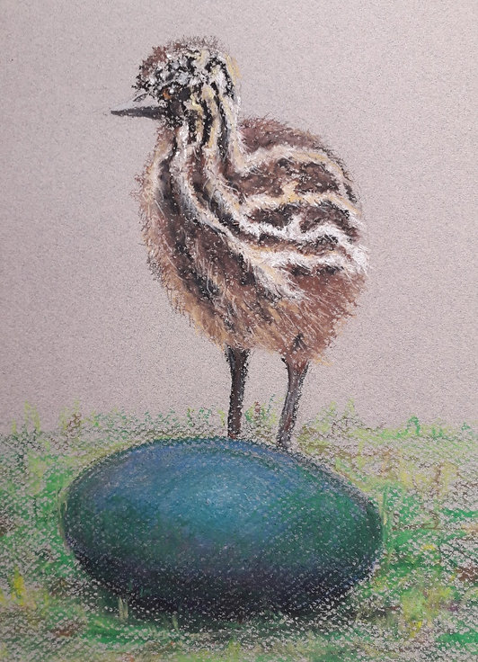 Emu chick.jpg