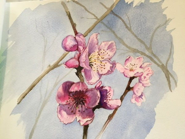 Val Cherry blossom wc.jpg