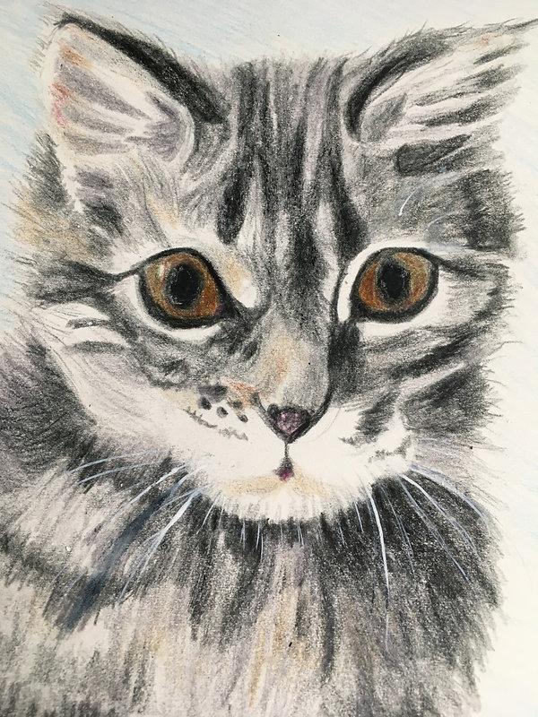 Barbara Cookie the kitten wc.jpg