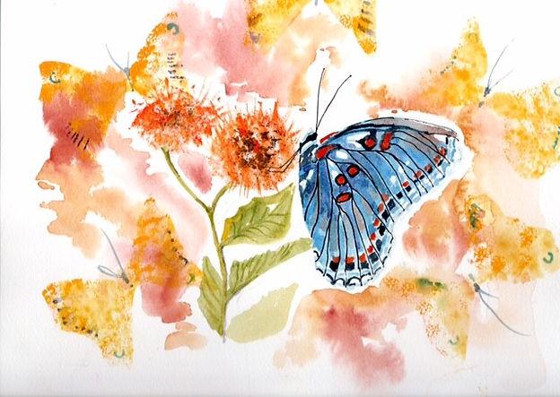 Maggie Blue Butterfly wc.jpg