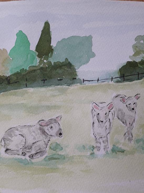 Christina lambs, lambs wc.jpeg