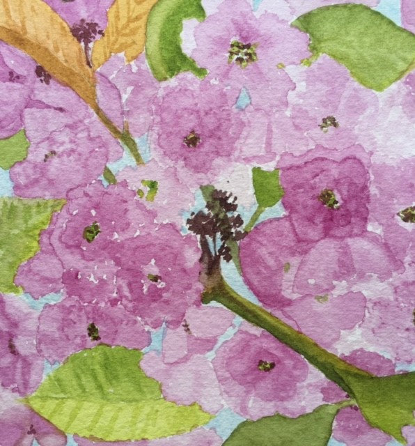 Barbara Ch blossom wc.jpg