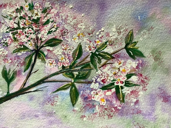 Pat Cherry blossom wc.jpg