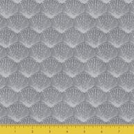 Grey Fan Shell