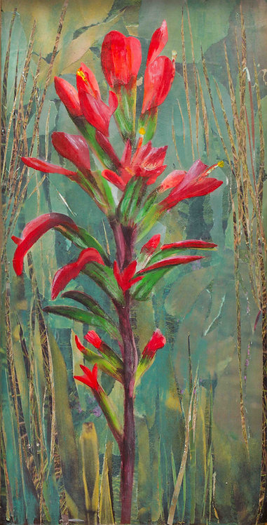 """Indian Paintbrush"" - Print"