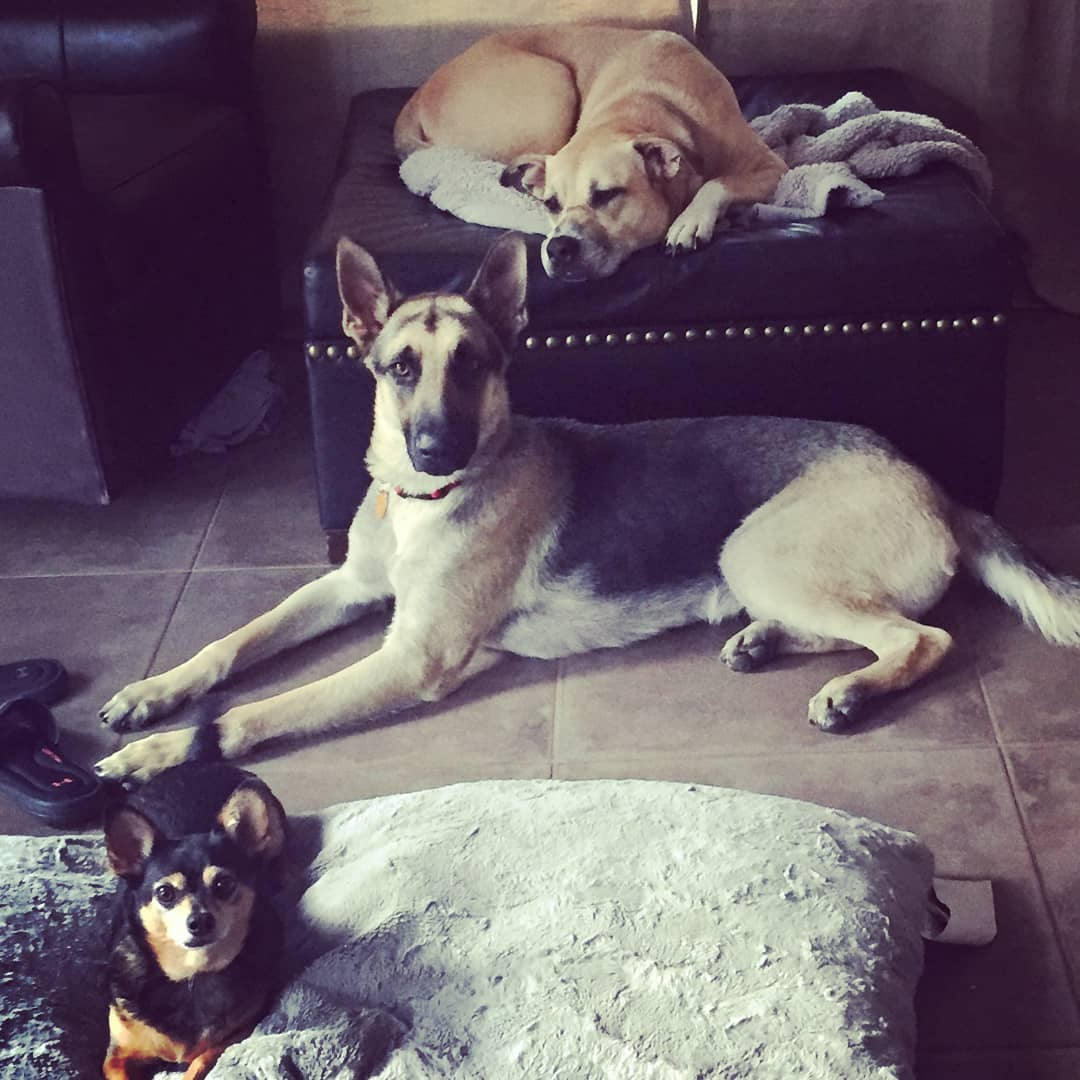All adopted