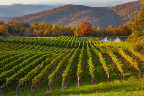 vineyards-with-beautiful.jpg