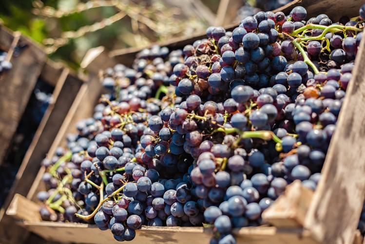 grapes-in-a-box.jpg
