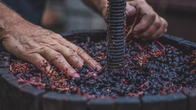 Pressing-Grapes-by-Bianca-isofache-unspl