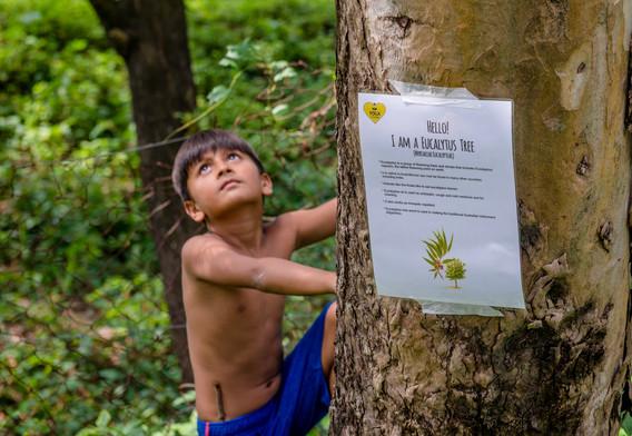 Trees of Goa Treasure Hunt