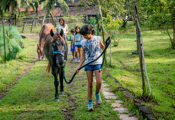 Taking the horses to pasture