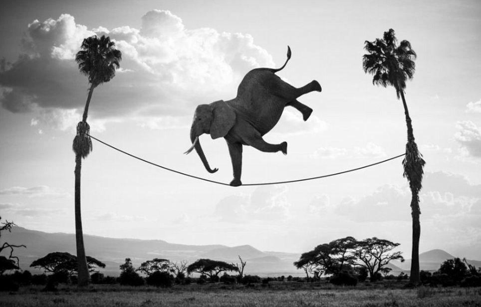 elephant_edited.jpg