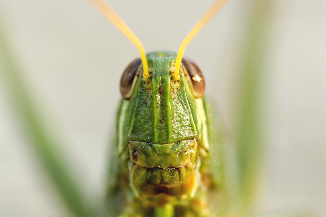 insectes_comestibles_nutrition_titre