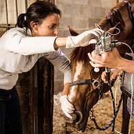 prélèvements respiratoires cheval Julie