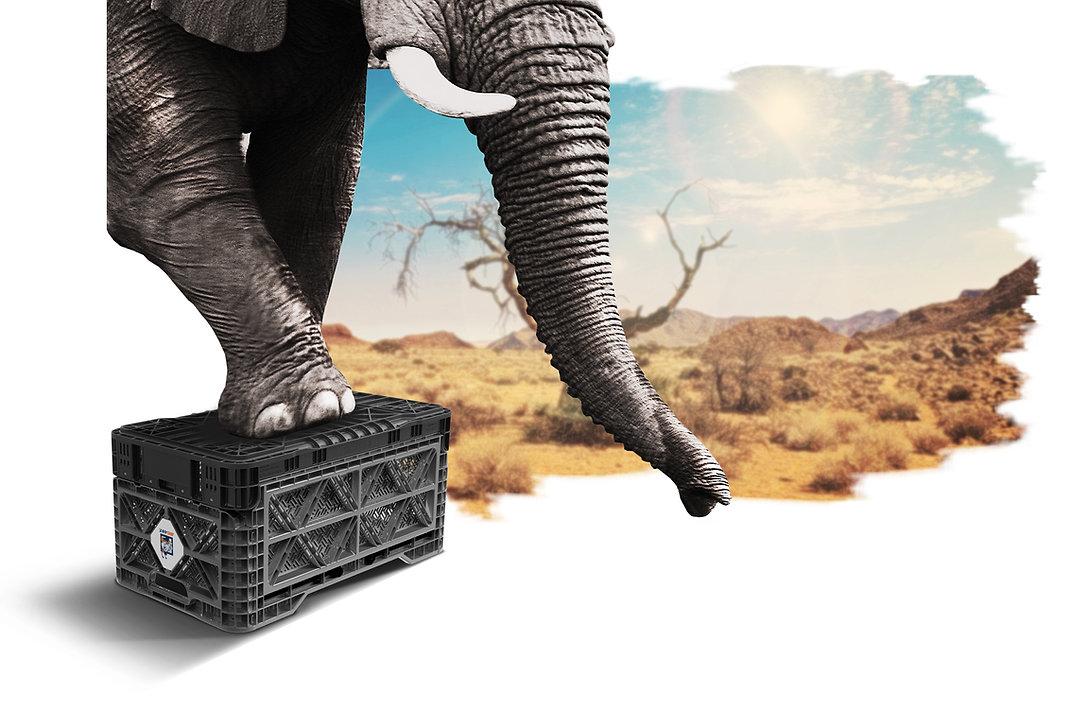 180825 홈페이지 배경이미지 차콜 (코끼리압강).jpg