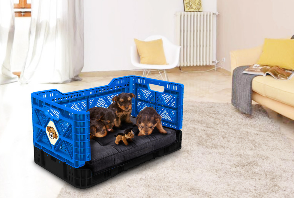 개도 좋아하는 개좋은 상자에요