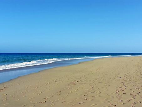 Teneriffa oder Fuerteventura