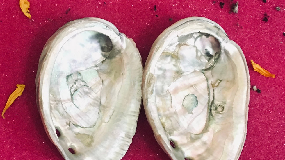 Abalone Shell (Smudge tray)