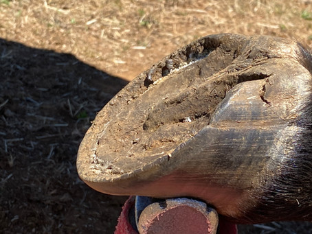 When is a hoof due for a trim?
