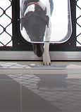 Petway-Dog-Door-Pet-Doors-Petway-and-Prowler-Proof-Authorised-Dealer-Chalmers-Security-Installations-Brisbane-Installer