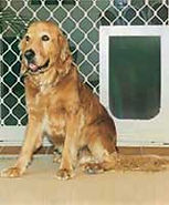 Large-Petway-Dog-Pet-Doors-Diamond-Security-Screen-Petway-and-Prowler-Proof-Authorised-Dealer-Chalmers-Security-Installations-Brisbane-Installer