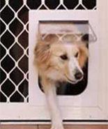 Medium-Petway-Dog-Pet-Doors-Diamond-Security-Screen-Petway-and-Prowler-Proof-Authorised-Dealer-Chalmers-Security-Installations-Brisbane-Installer